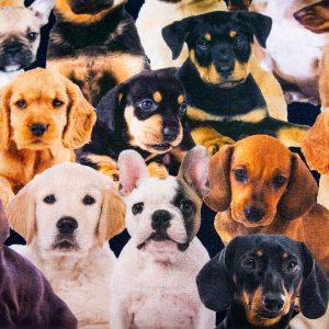 Psy i szczeniaki - tkanina bawełniana